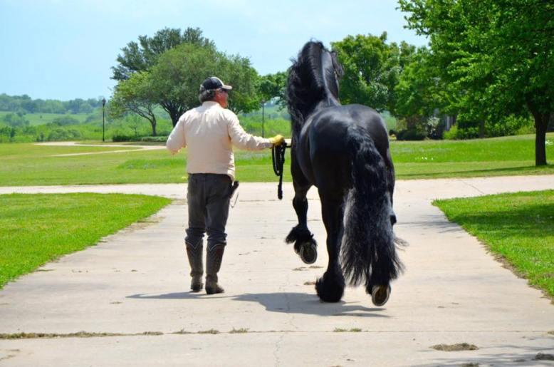 Black Star Sport Horses Events